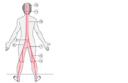Prikazuje pomembne kontrolne točke miofascialne povezave pri učenju<br /><br />   in kontroli v zadnji kinematični verigi.