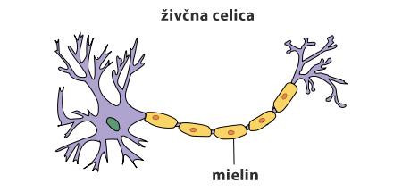 Živčna celica